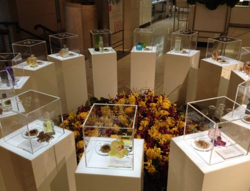 Acrylic boxes for David Jones flower show